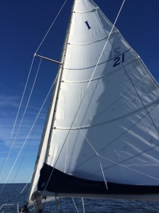 The new mainsail feeling the wind for the first time