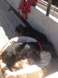 Pickles and Phinneus enjoying a very calm marina slip and sunshine to catch up on their much needed sleep