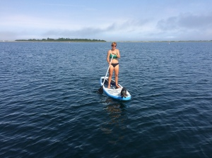 Trying to reintroduce the paddle board to Phinneus, he is not a big fan since going overboard in the Bahamas
