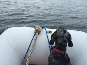 Phinneus as the dinghy navigator