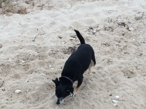 Pickles found another beach she likes