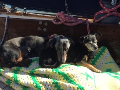 It can be cold in the mornings as we travel. so the Kermit afghan that my mom made me 40 years ago brings comfort to the canine crew as we leave Beaufort, SC