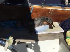 Phinneus is double checking the charts as we enter into Georgia today crossing the Savannah River. Some may think he is lazy but really he is an amazing multi tasker!