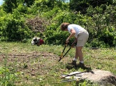 Annie Harris, The Essex Heritage Director is hard at work clearing bittersweet roots