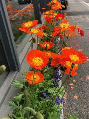 A beautiful window box of flowers in town this morning