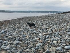 The rocks at low tide are still a challenge for Ms. Pickles